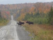 Moose Hunt 2006